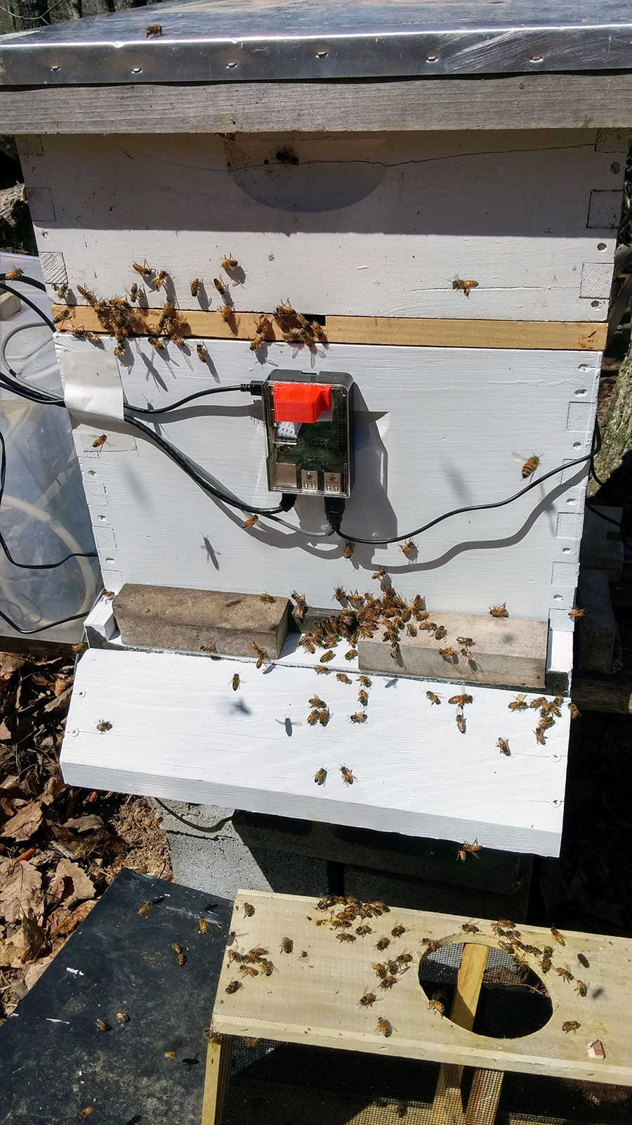 Saving The Bees Appalachian Magazine State University Bee Frame Wiring Video Youtube View Larger Image